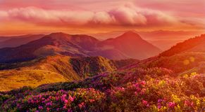 Erstaunlicher bunter Sonnenaufgang in den Bergen mit farbigen Wolken und rosa Rhododendron blüht auf Vordergrund Drastischer bunt lizenzfreie stockbilder
