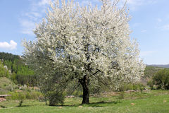 Erstaunlicher Frühlingsbaum stockfoto