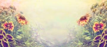 Erstaunlicher Garten blüht über unscharfem Naturhintergrund, Fahne Lizenzfreies Stockfoto