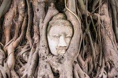Erstaunlicher Kopf des Sandsteins Buddha Stockfotografie