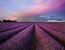 Erstaunlicher Lavendelfeldlandschaftsommersonnenuntergang Lizenzfreies Stockfoto