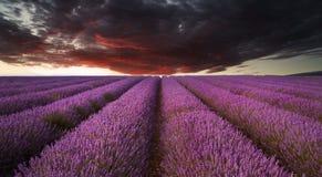 Erstaunlicher Lavendelweidelandschaft Sommersonnenuntergang unter schwermütigem Rot Lizenzfreie Stockfotos