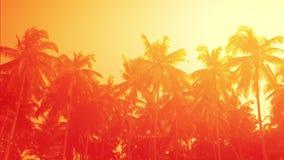 Erstaunlicher orange Sonnenuntergang am tropischen Strand mit Palmen stock footage