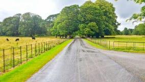 Erstaunlicher Park Lizenzfreies Stockfoto
