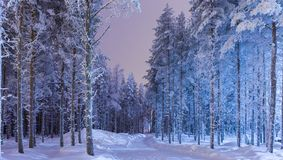 Erstaunlicher ruhiger Winter Forest Scenery im Suomi-Nordic-Bereich stockbilder