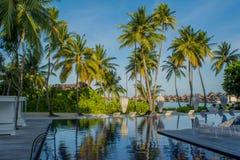 Erstaunlicher schöner tropischer Bereich des Swimmingpools mit Strandstühlen und Palmen bei Malediven Lizenzfreies Stockfoto