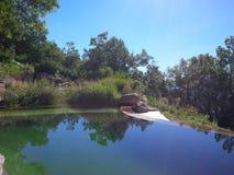 Erstaunlicher Schwimmenteich Stockfotos