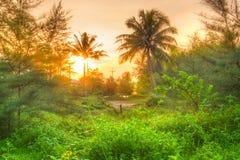 Erstaunlicher Sonnenaufgang im Dschungel stockbild