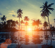 Erstaunlicher Sonnenuntergang auf Seestrand mit Palme nave Lizenzfreies Stockfoto
