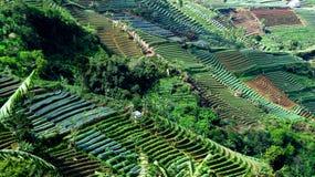 Erstaunlicher Terrassen-Zwiebel-Bauernhof in Argapura Majalengka Lizenzfreie Stockfotos