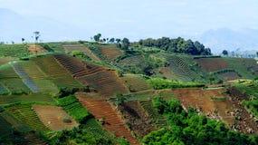 Erstaunlicher Terrassen-Zwiebel-Bauernhof in Argapura Majalengka Stockfoto