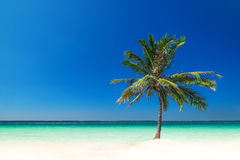 Erstaunlicher tropischer Strand mit Palme, weißem Sand und Türkisozean Stockfotografie