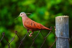 Erstaunlicher Vogel Stockbilder