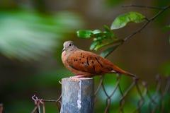 Erstaunlicher Vogel stockbild