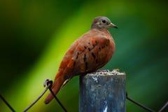 Erstaunlicher Vogel Lizenzfreies Stockbild