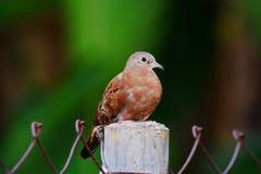 Erstaunlicher Vogel lizenzfreies stockfoto