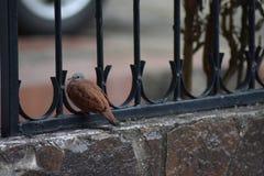 Erstaunlicher Vogel stockfotografie