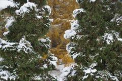 Erstaunlicher Winter Lizenzfreies Stockfoto