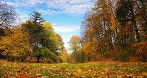 Erstaunliches Fallpanorama von Lemberg-Park Stockfotos