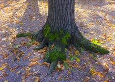 Erstaunliches Foto eines Baums bedeckt mit Moos Stockfotografie