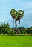 Erstaunliches Herz des Palmenahfelds und -flusses Stockbild