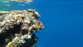 Erstaunliches Korallenriff ist unter dem Wasser tief, beleuchtet durch Sonnenlicht, Zeitlupe stock video