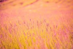Erstaunliches Lavendelfeld Bunter Sommerblumen-Landschaftshintergrund Stockbild
