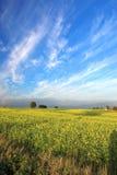 Erstaunliches Rapsfeld und blaues s Lizenzfreies Stockbild