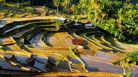 Erstaunliches Terrassen-Reis-Feld Stockfoto