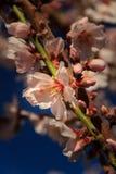 Erste Blüte des Frühlinges Stockfotos
