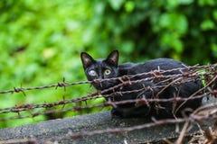 Erste blinde schwarze Katze auf Stacheldraht Stockfotografie