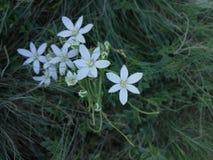 Erste Blumen des Frühlinges im Garten stockfotos