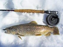 Erste Fische des Jahres Stockfotos