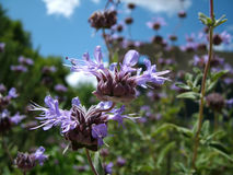 Erste Frühlings-Blüten Lizenzfreies Stockfoto