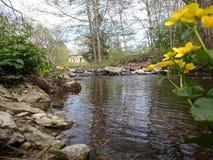 Erste Frühlingsblumen Lizenzfreie Stockfotos