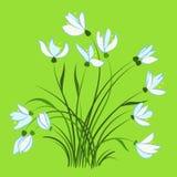 Erste Frühlingsblumen, Schneeglöckchen Lizenzfreie Abbildung
