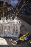 Erste Frühlingszweige in den Flaschen im Korb mit Garten pruner Lizenzfreies Stockbild