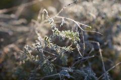 Erste Herbstfrost Morgen-Herbstlandschaft mit Nebel stockbild