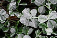 Erste Kälte auf Blättern Stockbilder
