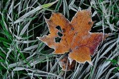 Erste Kälte auf Blättern Lizenzfreie Stockfotografie