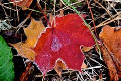 Erste Kälte auf Blättern Lizenzfreies Stockbild