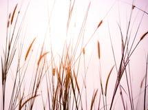 Erste Leuchte am Grasland - Stunde 3 von 66 Stockfoto