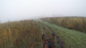 Erste Personenansicht des Reitens eines Pferds Gesichtspunkt des Reiters gehend am Hengst an der Natur Pov-Bewegung Abschluss obe Stockfotografie