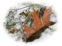 Erste Schneefälle Stockfoto
