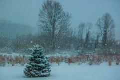 Erste Schneefälle Lizenzfreies Stockbild