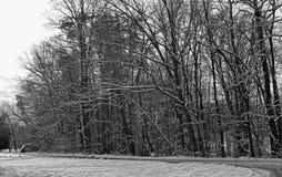 Erste Schneefälle des Winters bei Burke Lake, Virginia lizenzfreies stockfoto