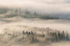 Erste sonnige Strahlen im nebeligen Tal Stockbild