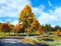 Erste Winterschnee- und -herbstbäume nähern sich Straße Lizenzfreies Stockfoto