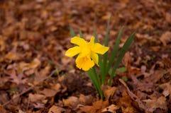 Erste Zeichen des Frühlinges Stockfoto