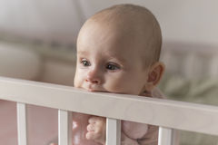Erste Zähne wachsen ein Baby Stockfotografie